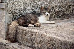 Kat die op de straat op een steen ligt Stock Afbeeldingen