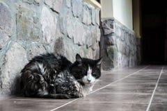 Kat die op de veranda liggen stock foto's