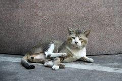 Kat die op de vloer en het kijken bepalen stock foto