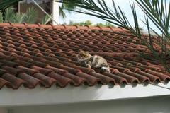 Kat die op een betegeld dak liggen stock foto's