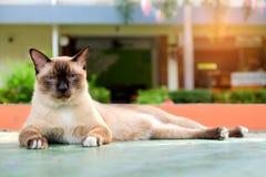 Kat die op een cement liggen Stock Afbeeldingen