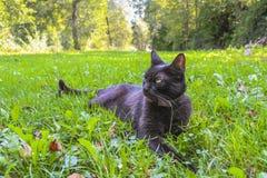 Kat die op een gebied rusten stock afbeeldingen