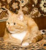 Kat die op een Kei wordt gebogen Royalty-vrije Stock Foto