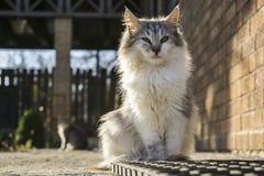Kat die op een omheining lopen Stock Foto's