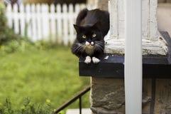 Kat die op een portiek rust Stock Afbeeldingen