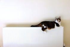 Kat die op een radiator liggen stock fotografie
