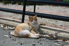 Kat die op een weg liggen stock afbeeldingen