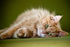 Kat die op groene achtergrond liggen Royalty-vrije Stock Afbeeldingen