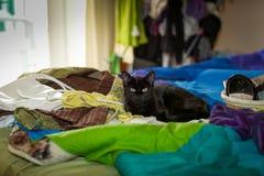 Kat die op het bed liggen Royalty-vrije Stock Foto