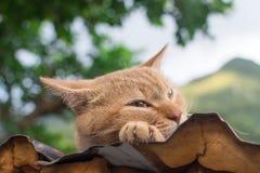 Kat die op het dak rusten Stock Foto
