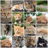 Kat die op het dak rusten Royalty-vrije Stock Foto