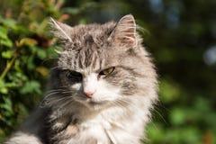 Kat die op iets op een de zomerdag letten Stock Foto