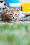 Kat die op land legt Royalty-vrije Stock Afbeelding