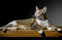 Kat die op lijstbovenkant leggen Stock Foto's