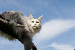 Kat die op tak ligt Royalty-vrije Stock Foto