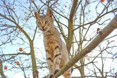 Kat die op tak van boom blijven Stock Afbeeldingen