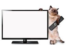 Kat die op TV letten Stock Foto's