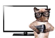 Kat die op TV letten Royalty-vrije Stock Foto