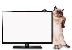 Kat die op TV letten Stock Foto