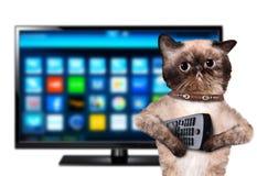 Kat die op TV letten Royalty-vrije Stock Fotografie