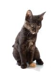 Kat die op wit wordt geïsoleerdp royalty-vrije stock fotografie