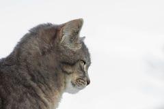 Kat die op wit wordt geïsoleerdr Stock Afbeeldingen