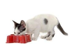 Kat die op witte achtergrond eten Royalty-vrije Stock Foto's