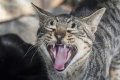 Kat die, open mond mauwen stock fotografie