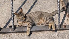 Kat die over op de straat rollen stock footage