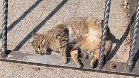 Kat die over op de straat rollen stock videobeelden