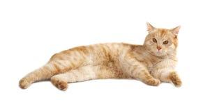 Kat die over witte achtergrond wordt geïsoleerdo Royalty-vrije Stock Fotografie