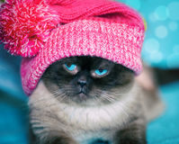 Kat die rode hoed dragen Royalty-vrije Stock Foto's