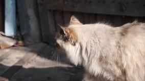 Kat die in schuur gaan stock video