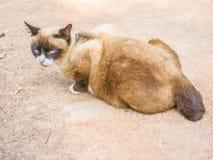 Kat die ter wereld liggen Royalty-vrije Stock Foto