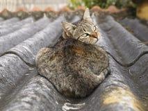 Kat die terug eruit ziet Stock Foto's