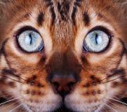 Kat die tot de bovenkant kijken Stock Foto's