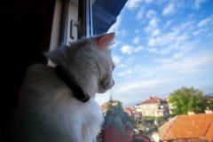 Kat die uit het venster kijkt Stock Afbeelding