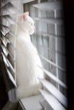 Kat die uit het venster kijkt stock foto's