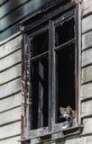 Kat die uit het venster van een verlaten huis in Patagonië kijken stock foto's