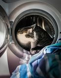 Kat die uit wasmachine stappen Royalty-vrije Stock Fotografie