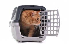 Kat die uit zijn kooi gluurt Stock Foto