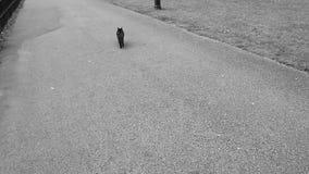 Kat die van omheining springen stock video