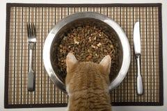 Kat die van zilveren kom eet Stock Fotografie