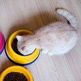 Kat die voedsel voor huisdieren in een kom eten Stock Afbeelding