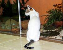 Kat die vooraan een kleine tuin stellen Stock Afbeelding