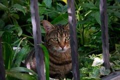 Kat die voorbij de omheiningsbars kijken royalty-vrije stock afbeeldingen