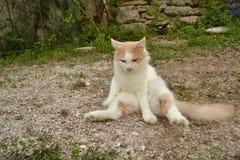 Kat die yoga doen Stock Foto's