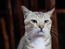 Kat die zich op een stoel bevinden royalty-vrije stock afbeeldingen
