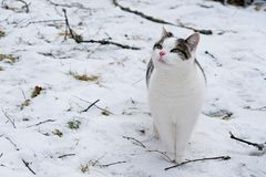 Kat die zich op sneeuw bevinden Royalty-vrije Stock Afbeeldingen