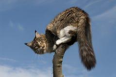 Kat die zich op tak bevindt Royalty-vrije Stock Foto
